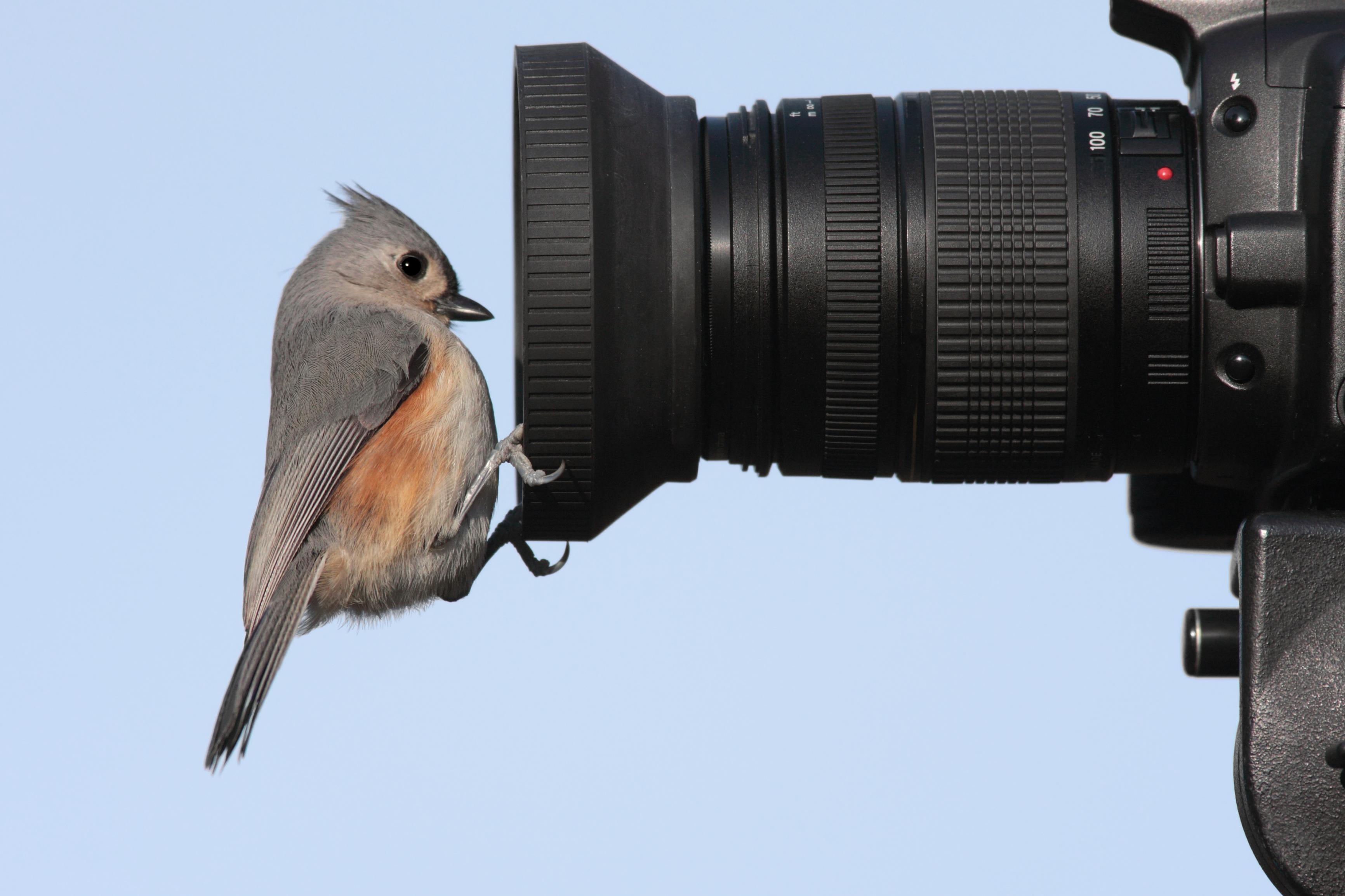 Kamera - Vogel