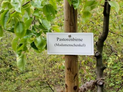 20170423 NF_Blütenwegfest_KN-8.jpg