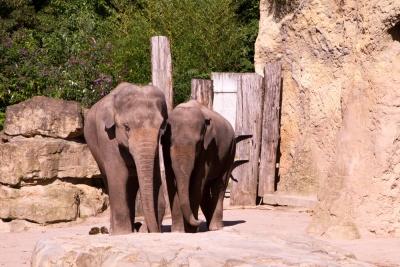 20170730 Fotogruppe_Zoo_Anke-27.jpg