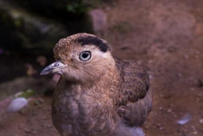 20170730 Fotogruppe_Zoo_Anke-37.jpg