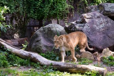 20170730 Fotogruppe_Zoo_Anke-79.jpg
