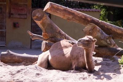 20170730 Fotogruppe_Zoo_Anke-104.jpg