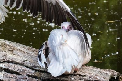 20170730 Fotogruppe_Zoo_Karl-20-2.jpg