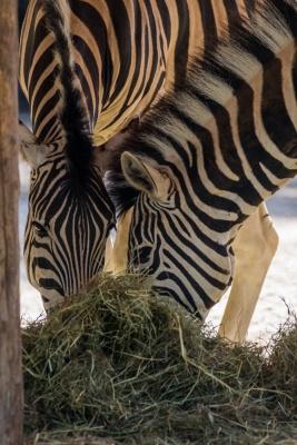 20170730 Fotogruppe_Zoo_Karl-85.jpg