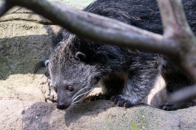 20170730 Fotogruppe_Zoo_Karl-110.jpg