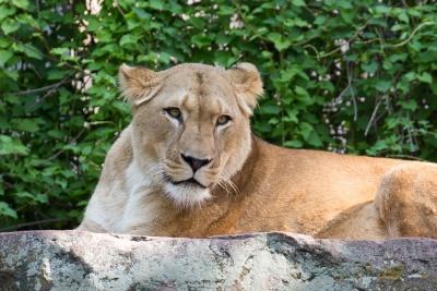 20170730 Fotogruppe_Zoo_Karl-132.jpg