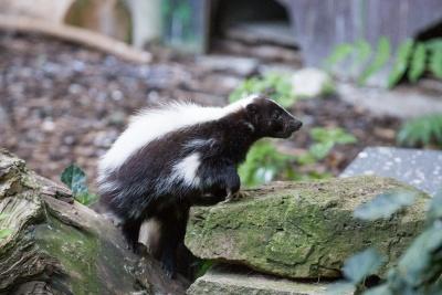 20170730 Fotogruppe_Zoo_Karl-204.jpg