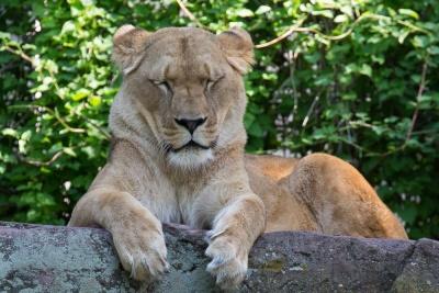 20170730 Fotogruppe_Zoo_Karl-214.jpg