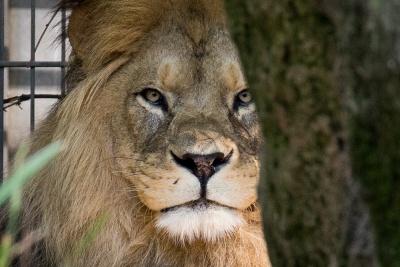 20170730 Fotogruppe_Zoo_Karl-219.jpg