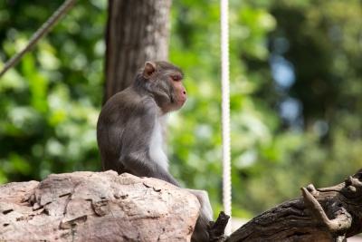 20170730 Fotogruppe_Zoo_Karl-394.jpg