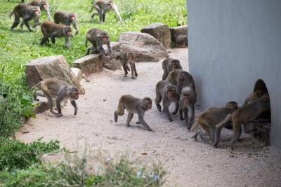 20170730 Fotogruppe_Zoo_Karl-420.jpg
