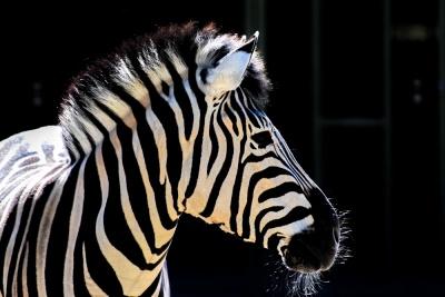 20170730 NF_Zoo_Bärbel-29.jpg