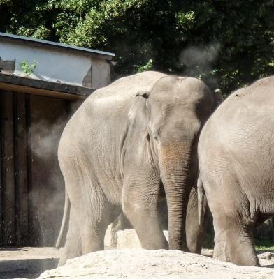 20170730 Fotogruppe_Zoo_Sabine-24.jpg