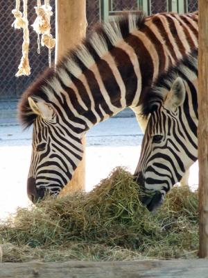 20170730 Fotogruppe_Zoo_Sabine-28.jpg