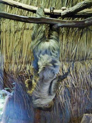 20170730 Fotogruppe_Zoo_Sabine-63.jpg