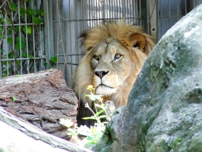 20170730 Fotogruppe_Zoo_Sabine-101.jpg