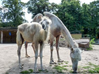 20170730 Fotogruppe_Zoo_Sabine-160.jpg