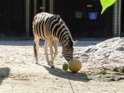 20170730 Fotogruppe_Zoo_Anna Maria-24.jpg