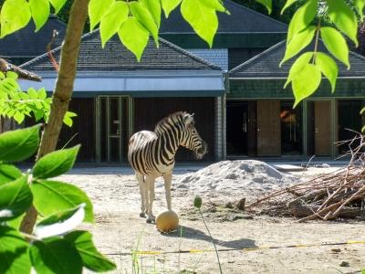 20170730 Fotogruppe_Zoo_Anna Maria-26.jpg