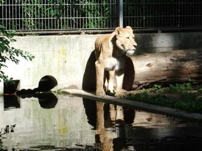 20170730 Fotogruppe_Zoo_Anna Maria-71.jpg