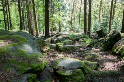 Naturerlebniswoche_05-2016_023.jpg