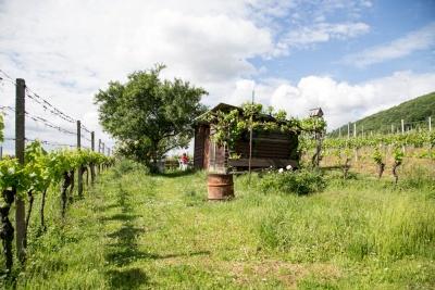 20170520_NF Einweihung Garten_Karl-88.jpg