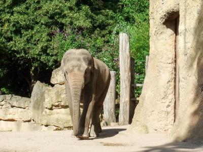 20170730 Fotogruppe_Zoo_Anna Maria-22.jpg